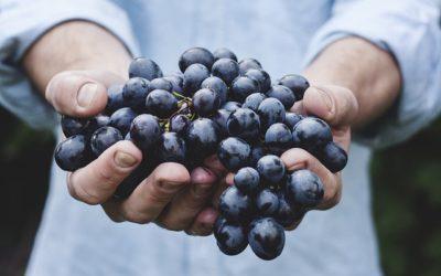 La protesta dei viticultori in Sicilia